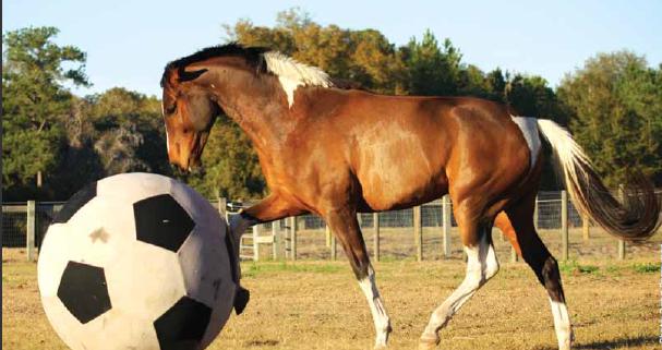 Training_ Play & Precision - Equine Wellness Magazine